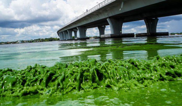Algas se reproduziram rapidamente