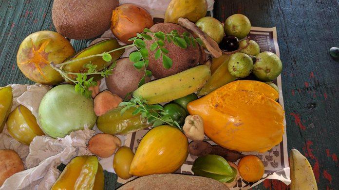 Frutas colhidas durante o passeio em Homestead (FL)