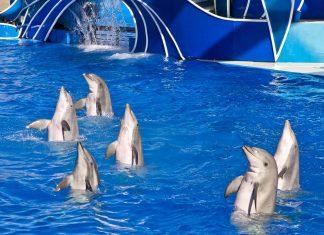 SeaWorld anuncia nova apresentação com golfinhos