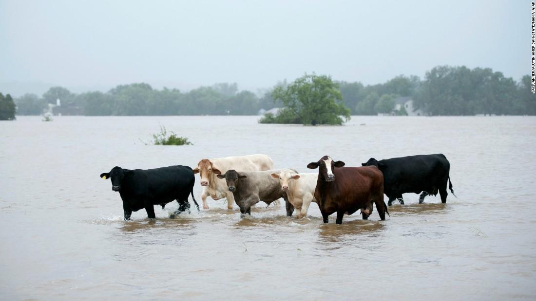 Animais também sofrem com as enchentes