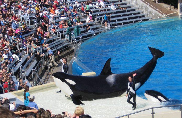 Parques do SeaWorld vêm sofrendo com a queda de público