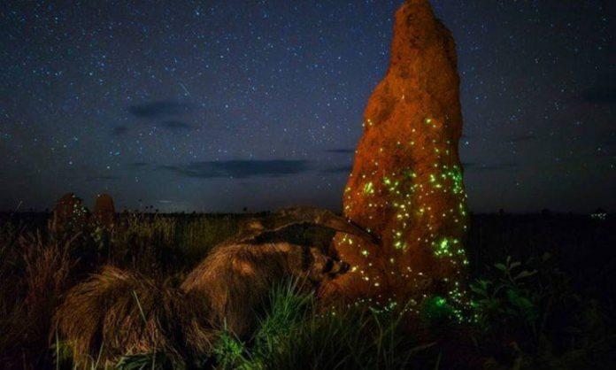 The Night Raider – foto vencedora de Marcio Cabral