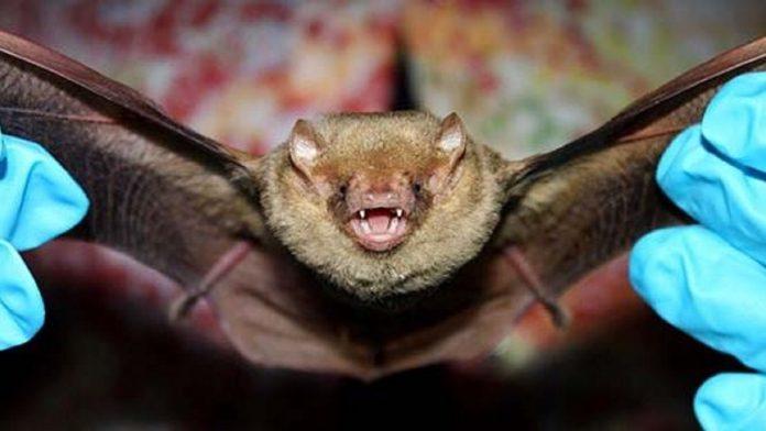 Vítima de mordida de morcego morreu com vírus da raiva