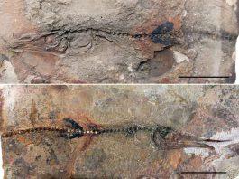 Fóssil foi encontrado na Colômbia