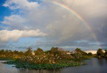 Wakodahatchee Wetlands Rainbow (Foto: Matthew Paulson)