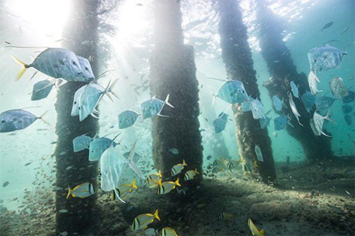 Câmera subaquática fica embaixo do píer em Deerfield Beach e proporciona imagens incríveis
