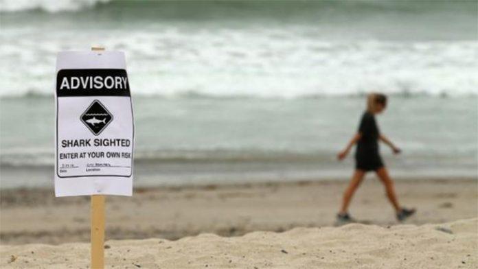 Placa avisa da presença de tubarões na praia