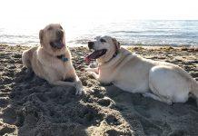 Thor e Madonna na praia da Spanish River Park