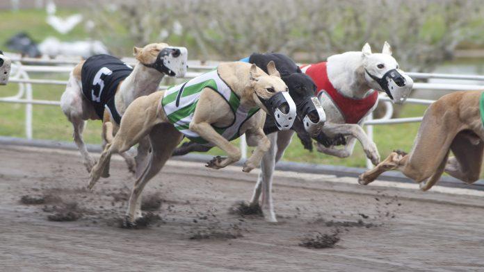 Corridas de cachorros vão acabar na FL