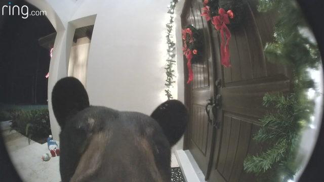 Urso negro visitou família em Naples