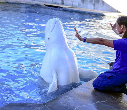 SeaWorld terá visitas guiadas nos bastidores do parque (Foto: Lori Cherry)