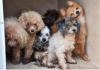 Mais de 50 cães estavam na casa em Palm Beach Gardens (FL)