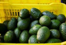 Empresa faz recall de abacates na Flórida e em outros cinco estados