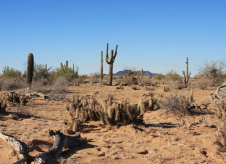 Refúgio natural de Cabeza Prieta, no Arizona — Foto Andrew Loescher USFWS