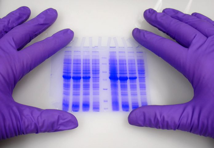 Pela regra, o órgão pode solicitar os testes em qualquer etapa dos processos migratórios (foto: pikiest)