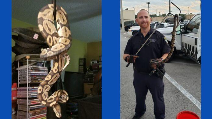Cobra encontrada em vaso sanitário em Coral Springs (Foto Cortesia Coral Springs Fire Dpt)