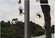 Caranguejos invadem casa de morador em Port Saint Lucie (FL) (Imagem cedida por Dan Skowronski à WPTV)