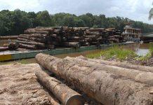 Nos últimos meses, os índices de devastação da Amazônia se multiplicaram em relação ao mesmo período do ano anterior (Foto: Wilson Dias/Agência Brasil)