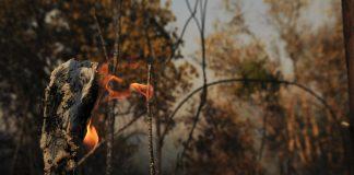 Investigações mostram que o grupo já derrubou e tocou fogo em mais de 5 mil quilômetros de mata (Foto: Pedro Ventura/Agência Brasília/Flickr)