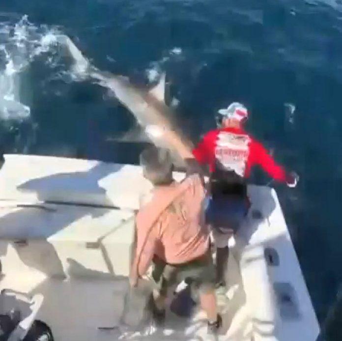 O grande tubarão branco mede quase cinco metros e pesa meia tonelada (Foto: Reprodução WSVN)