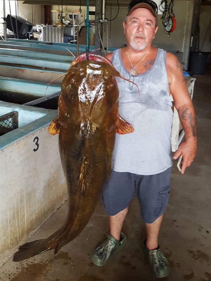 O peixe de 69,9 libras e 48,5 polegadas de comprimento foi pescado no Yelllow River (foto: Faebbok FWC)