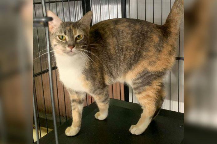 A ONG também permite que a pessoa abrigue o animal temporariamente até que um lar definitivo seja encontrado (foto: Pet Center 364)