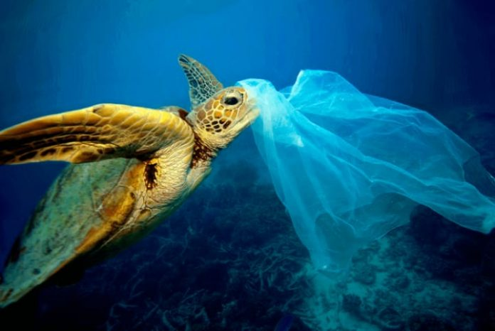 As tartarugas marinhas são as maiores vítimas da poluição dos oceanos causada pela ação do homem (foto: Oceana)