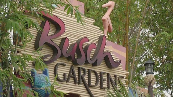 Busch Gardens em Tampa, FL (Foto: Divulgação)