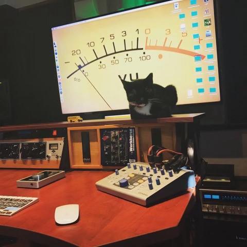 A 'gafilha' Tesla Zoroastra, no estúdio que a dupla tem em casa