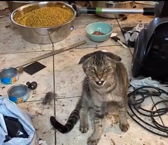 Missão de resgate dos felinos durou vários dias (foto: Reprodução 7News)