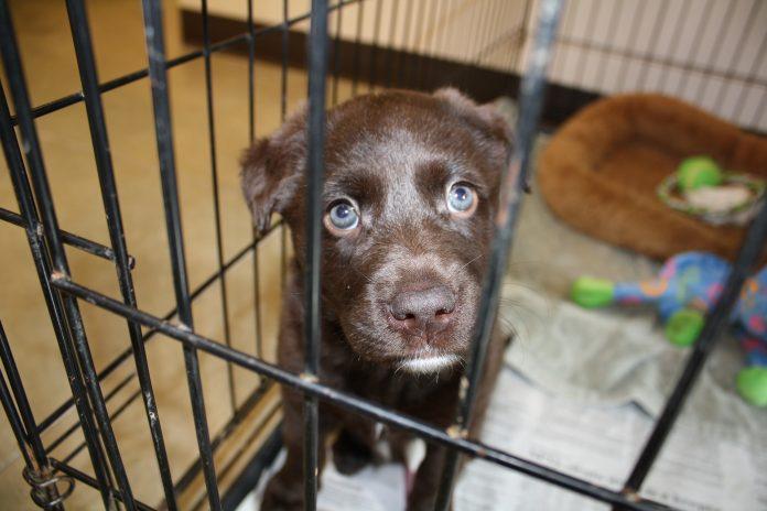 Pelo menos 275 cães e gatos estão à espera de um lar no Broward County Animal Care (foto: pixabay)