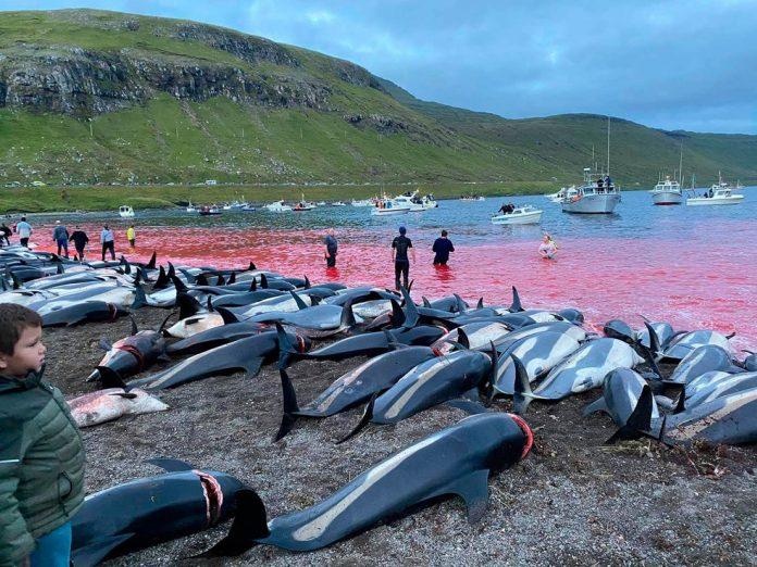 Imagens de golfinhos mortos rodaram o mundo (Foto: Sea Shepherd Conservation Society)